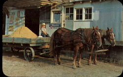 Amish Horses And Wagon