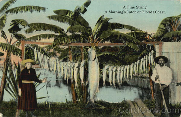Fishing: A Fine String. A Morning's Catch on Florida Coast