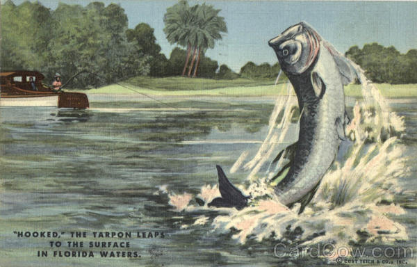 Fishing: Hooked, The Tarpon Leaps to the surface in Florida Waters
