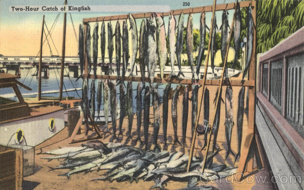 Fishing: Two-Hour Catch of Kingfish