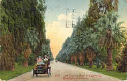A Country Road in California, Eucalyptii and Palms Postcard