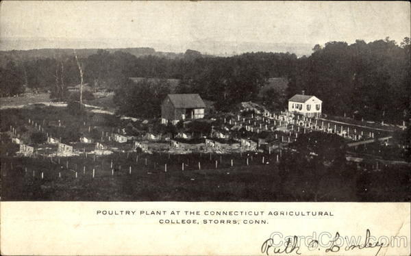 Poultry Plant At The Connecticut Agricultural College Storrs