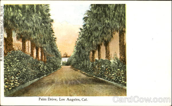 Palm Drive Los Angeles California