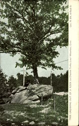 Tree Growing Out Of A Rock, Cheshire Trolley Line