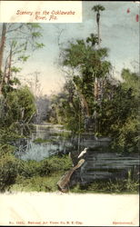 Scenery On The Ocklawaha River
