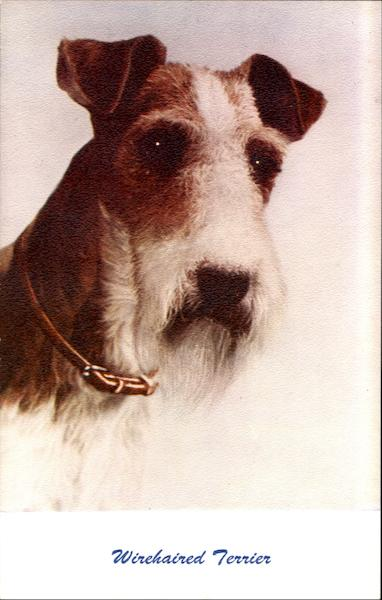 Wirehaired Terrier Dogs