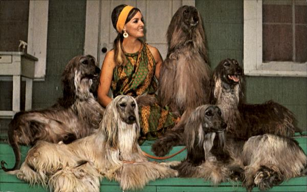 Dic Mar Afghans Dogs