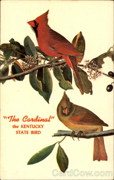 The Cardinal Kentucky Birds