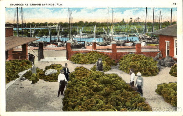Sponges At Tarpon Springs Florida