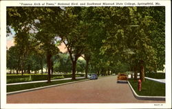 Famous Arch Of Trees, National Blvd. and Southwest Missouri State College