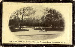 The Lily Pond In Flower Garden, Prospect Park