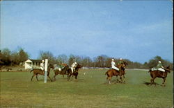 Polo Action Postcard