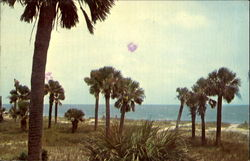 South Carolina's Stately Palmetto Trees, Edisto Beach State Park