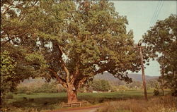 The Washington Oak
