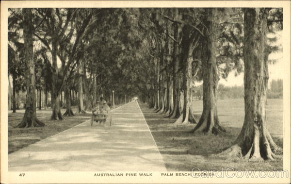 Australian Pine Walk Palm Beach Florida