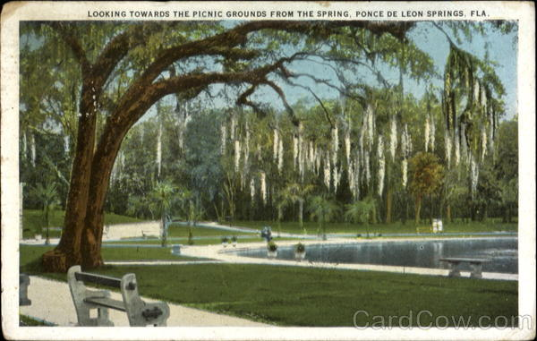 Looking Towards The Picnic Grounds From The Spring Ponce De Leon Springs Florida