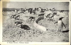 A Penguin Rookery Postcard