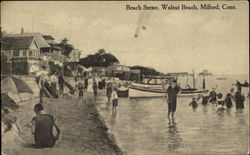 Walnut Beach Scene, Walnut Be