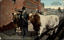 Prize Cattle, Union Stock Yards
