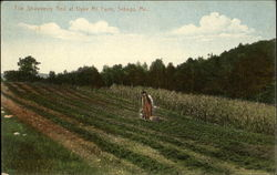 The Strawberry Bed At Dyke Mt. Farm