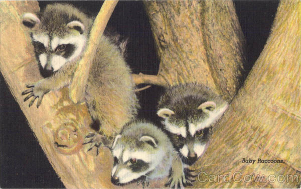 Baby Raccoons in a Tree