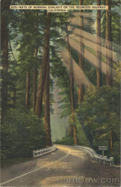 Rays of Morning Sunlight on The Redwood Highway California