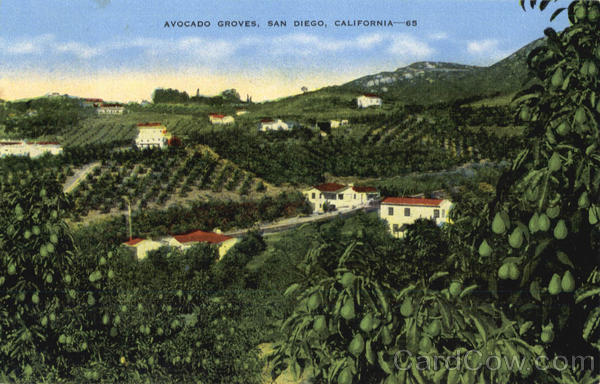 Avocado Groves San Diego California