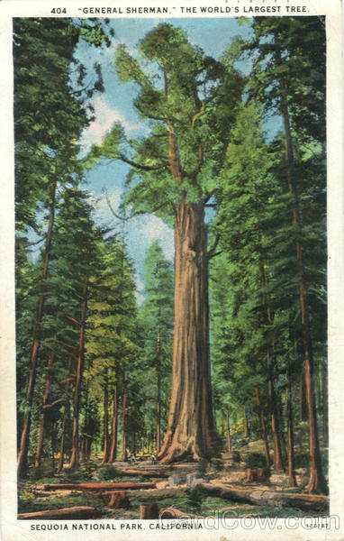 General Sherman, The World's Largest Tree Sequoia National Park California