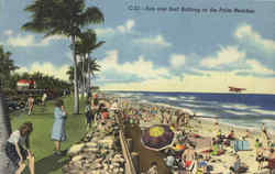 Sun and Surf Bathing at the Palm Beaches Postcard