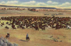 A Cattle Roundup On The Range