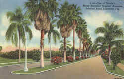 One of Florida's Many Beautiful Tropical Avenues, Frances Road