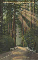 Rays of Morning Sunlight on The Redwood Highway
