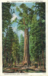 General Sherman, The World's Largest Tree