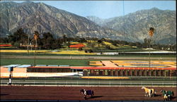 Santa Anita - Framed By Palm Trees Postcard