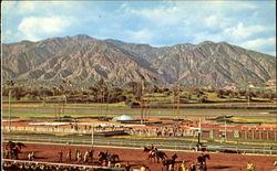 Arcadia California Vintage Postcards Amp Images