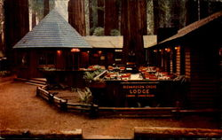 Patio, Richardson Grove State Park