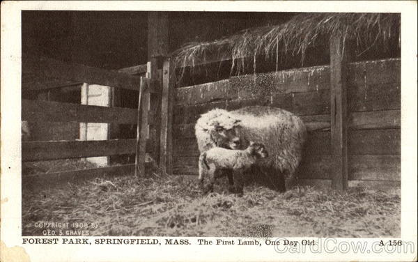 The First Lamb, Forest Park Springfield Massachusetts