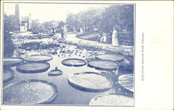 Lilly Pond, Lincoln Park Postcard
