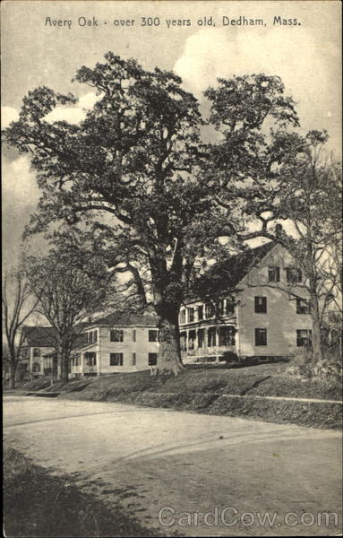 Avery Oak Dedham Massachusetts
