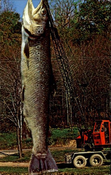 Imágenes Cómicas de Pesca Card00737_fr