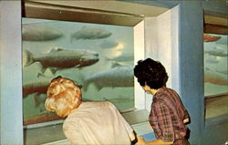 Fish Viewing Room