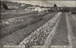 Corliss Bros., Inc. Nurseries