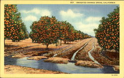 Irrigated Orange Grove