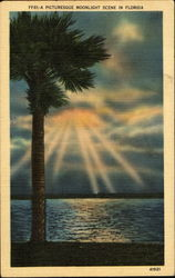 A Picturesque Moonlight Scene In Florida