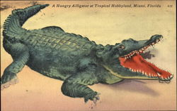 A Hungry Alligator At Tropical Hobbyland
