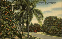 Motoring Thru Palm Bordered Orange Groves