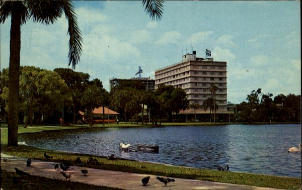 Pigeons Palms And Swans Orlando Florida