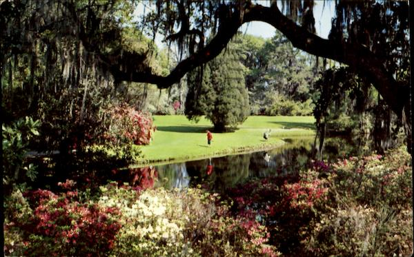 A Scene In Beautiful Magnolia Gardens Charleston South Carolina