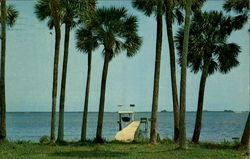 Stately Palms Adorn Indian River, Indian River