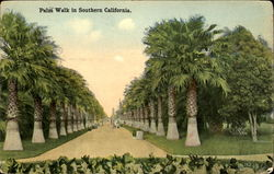 Palm Walk In Southern California